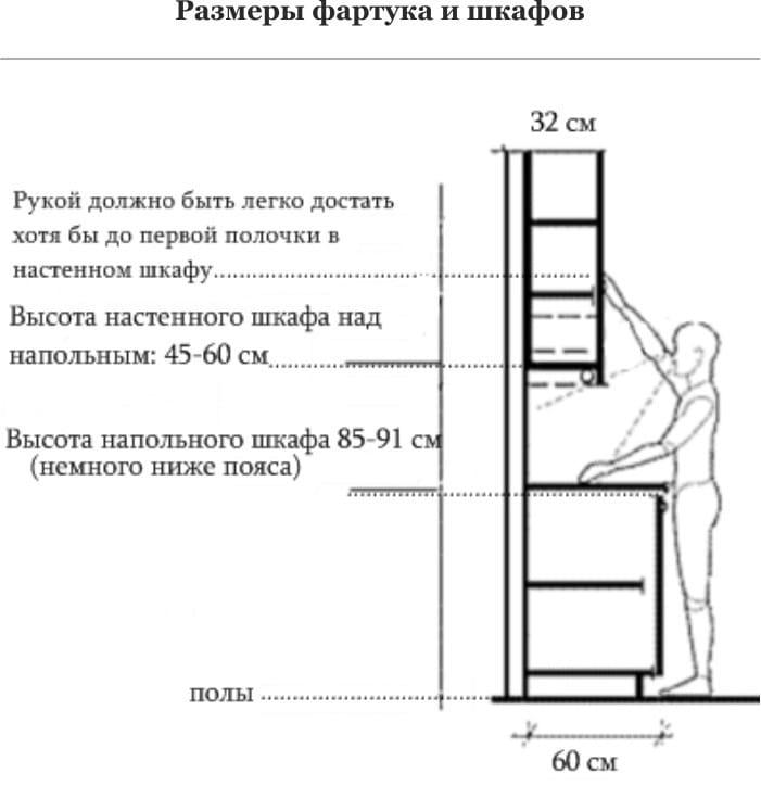 התלות בגודל של רהיטים על גובה האדם