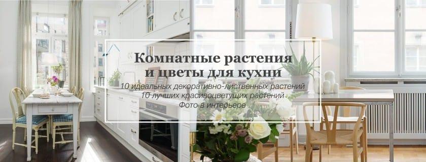 kukat ja kasvit keittiön sisätiloissa
