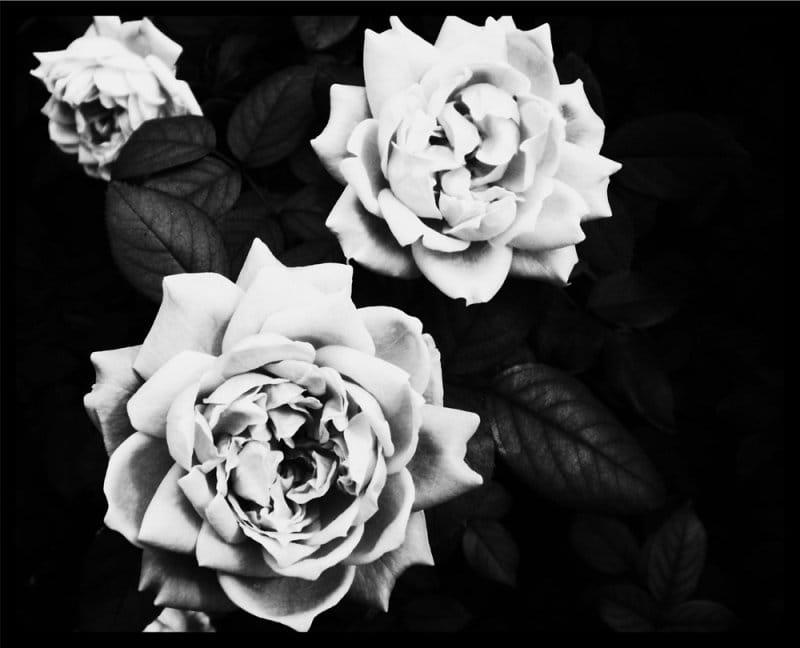Musta ja valkoinen tapetti kukkia