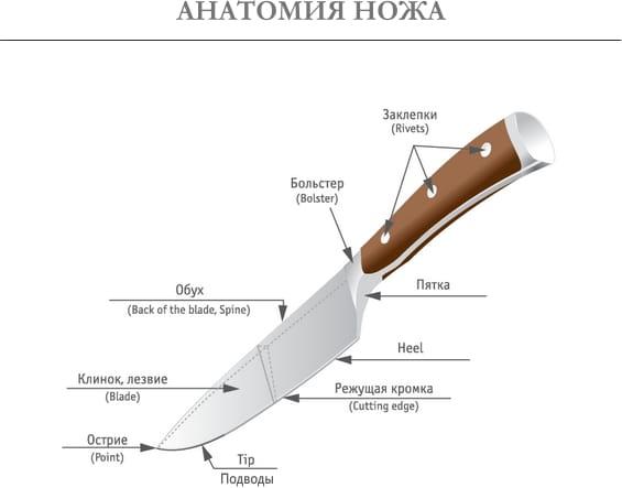 Anatomie du couteau