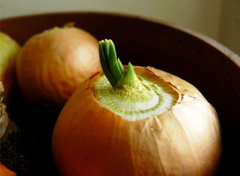 การปลูกต้นหอมสำหรับผักใบเขียว