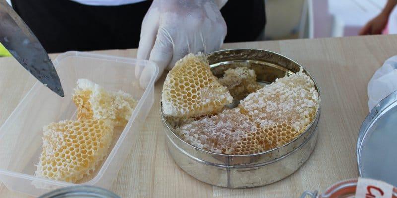 אחסון דבש בחלת דבש