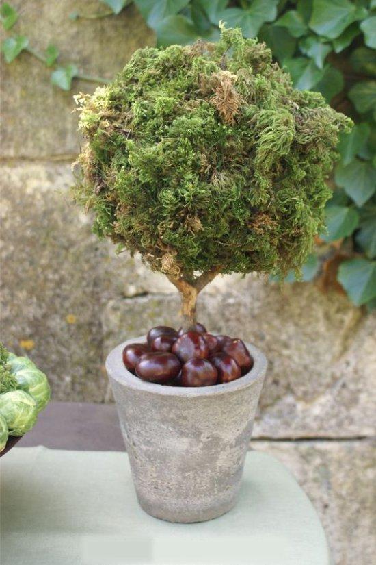 Élő Topiary-t gesztenyével egy potban